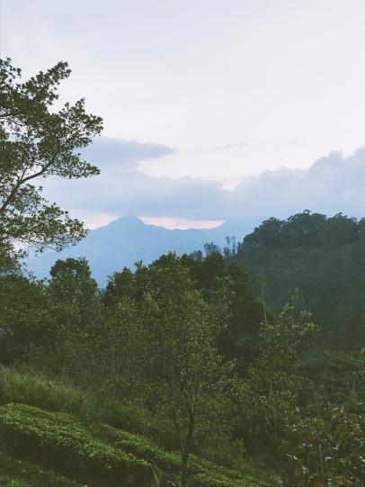 La vue depuis notre logement