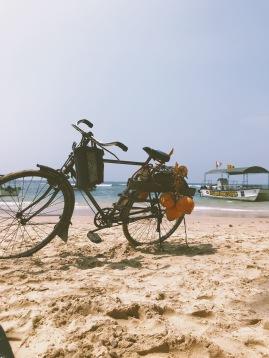 Les vendeurs de coco et leurs vélos magnifiques